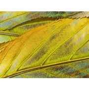 Carlyle Fine Art Nature Yellow Dust by Jordan Carlyle Graphic Art; 15'' x 20''