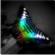 iCanvas Colorful Butterfly Photographic Print on Canvas; 12'' H x 12'' W x 1.5'' D
