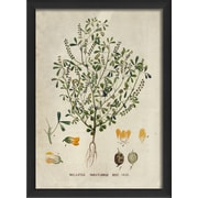The Artwork Factory Botanical Melitous Parviflorus Framed Graphic Art