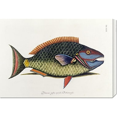 Global Gallery 'The Parrot Fish' by Mark Catesby Graphic Art on Wrapped Canvas