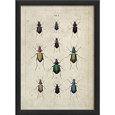 The Artwork Factory Beetles Framed Graphic Art; Black
