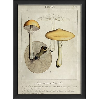 The Artwork Factory Agaricus Silvicola Framed Graphic Art; Black