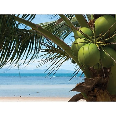 Island Way Outdoor Coconuts Photographic Print on Canvas