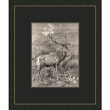 Melissa Van Hise Forest Dwellers lll Framed Graphic Art
