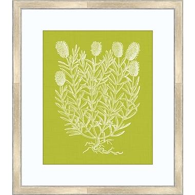 Melissa Van Hise Floral Impression I Framed Graphic Art; Spring Green