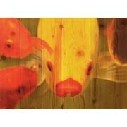 Gizaun Art Fish Lips Photographic Print; 22.5 x 16