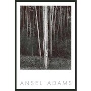 Frames By Mail 'Aspens' by Ansel Adams Framed Photographic Print