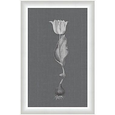Melissa Van Hise Flora V Framed Graphic Art