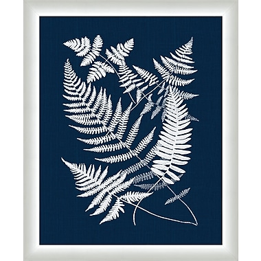 Melissa Van Hise Buckler Ferns Framed Graphic Art; Navy