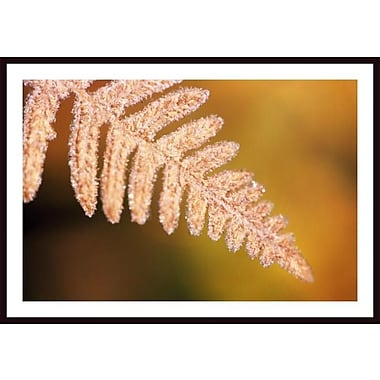 Printfinders 'Frost on a Fern Leaf' by Craig Tuttle Framed Photographic Print