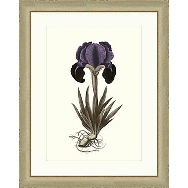 Melissa Van Hise Buchoz Flowers I Framed Graphic Art