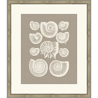 Melissa Van Hise Colorful Shells III Framed Graphic Art; Taupe
