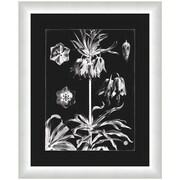 Melissa Van Hise Flora I Framed Graphic Art; White/Black