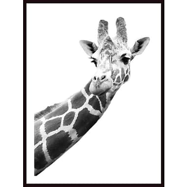 Printfinders 'Portrait of a Giraffe' by Darren Greenwood Framed Photographic Print