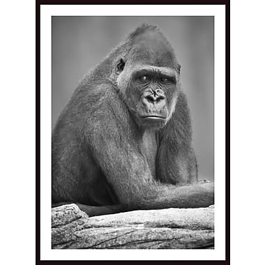 Printfinders 'Monkey' by Darren Greenwood Framed Photographic Print