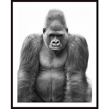 Printfinders 'Gorilla' by Darren Greenwood Framed Photographic Print