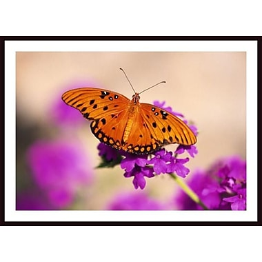 Printfinders 'Butterfly' by Craig Tuttle Framed Photographic Print