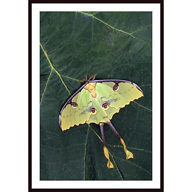 Printfinders 'Closeup of Unique Butterfly' by Jeff Lepore Framed Photographic Print