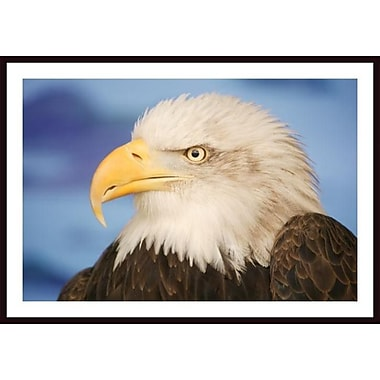 Printfinders 'Profile of a Bald Eagle' by Don Hammond Framed Photographic Print