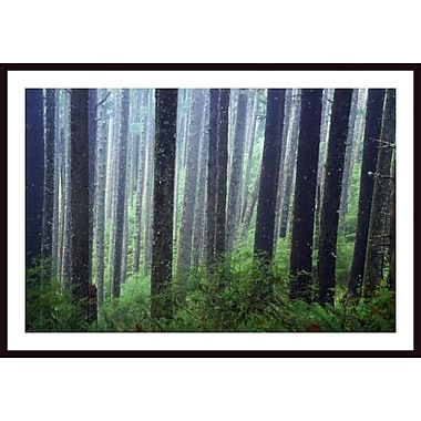 Printfinders 'Trees in Fog' by Craig Tuttle Framed Photographic Print