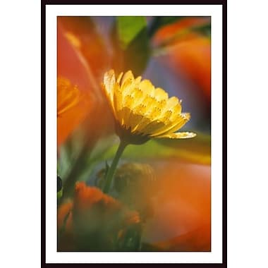 Printfinders 'Close Up of Wildflower' by Craig Tuttle Framed Photographic Print