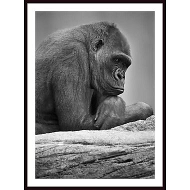 Printfinders 'Gorilla Portrait' by Darren Greenwood Framed Photographic Print
