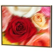 Menaul Fine Art Roses Limited Edition by Scott J. Menaul Framed Photographic Print; 22 x 28