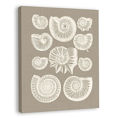 Melissa Van Hise Colorful Shells III Graphic Art on Wrapped Canvas; Taupe