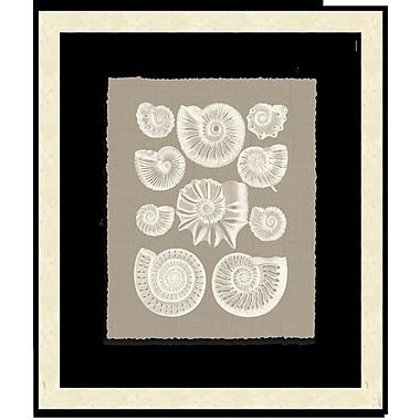 Melissa Van Hise Shells III Framed Graphic Art; Taupe