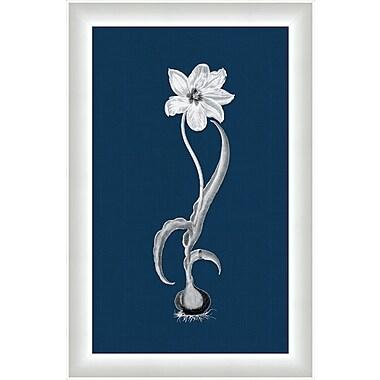 Melissa Van Hise Flora ll Framed Graphic Art