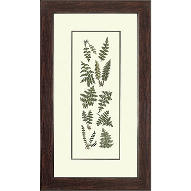 Melissa Van Hise Ferns II Framed Graphic Art
