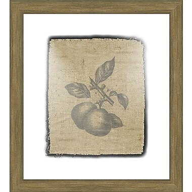 Melissa Van Hise Pears Framed Graphic Art; Black