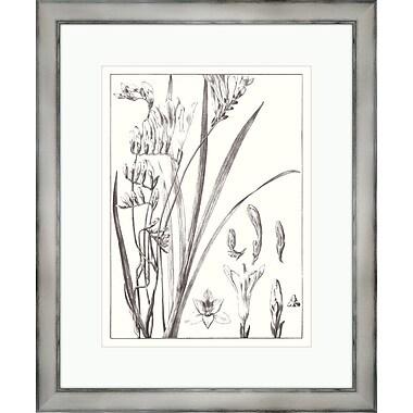 Melissa Van Hise Gray Flora lll Framed Graphic Art
