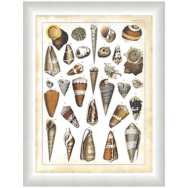 Melissa Van Hise Oken Shells ll Framed Graphic Art
