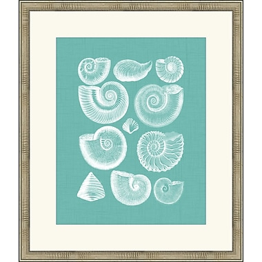 Melissa Van Hise Colorful Shells I Framed Graphic Art; Spa Blue