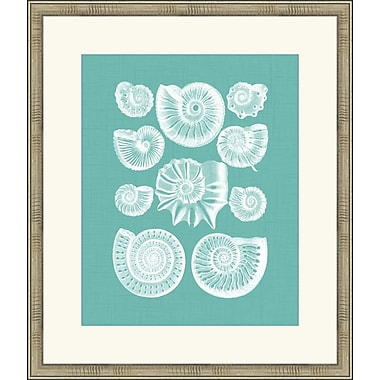 Melissa Van Hise Colorful Shells III Framed Graphic Art; Spa Blue