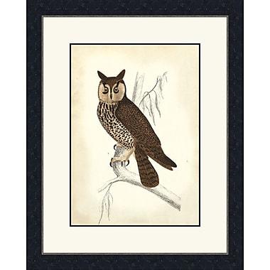 Melissa Van Hise Wise Owl Framed Graphic Art