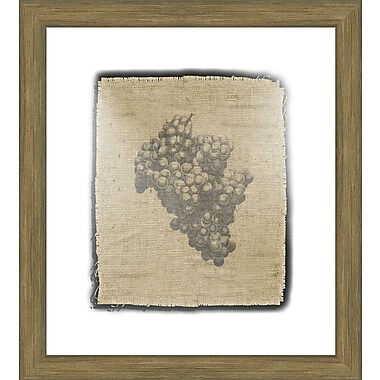 Melissa Van Hise Grapes Framed Graphic Art; Black