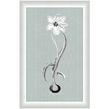 Melissa Van Hise Flora II Framed Graphic Art