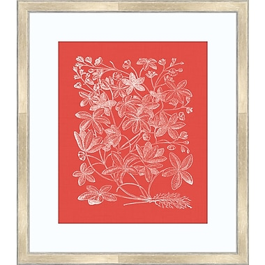 Melissa Van Hise Floral Impression III Framed Graphic Art; Watermelon