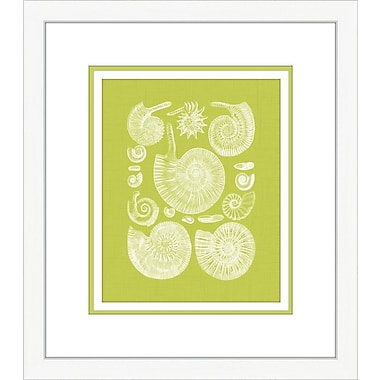 Melissa Van Hise Coquillage II Framed Graphic Art; Green