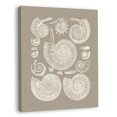 Melissa Van Hise Colorful Shells II Graphic Art on Wrapped Canvas; Taupe