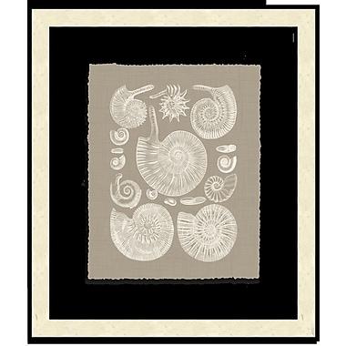 Melissa Van Hise Shells II Framed Graphic Art; Taupe