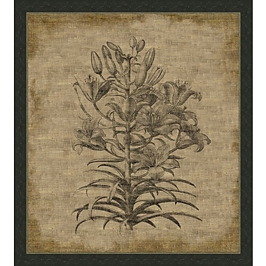 Melissa Van Hise Flora VI Framed Graphic Art