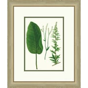Melissa Van Hise Emerald Foliage lV Framed Graphic Art