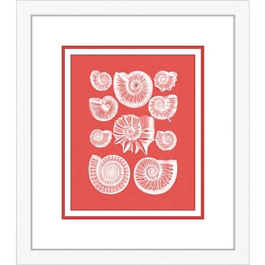 Melissa Van Hise Coquillage III Framed Graphic Art; Red