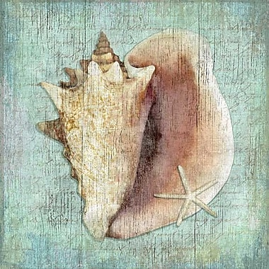 Vintage Signs Conch Wall Art by Suzanne Nicoll Graphic Art Plaque