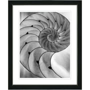 Studio Works Modern ''Cambrian Sea Shell'' by Zhee Singer Framed Graphic Art in Grey; Black