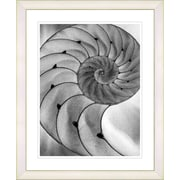 Studio Works Modern ''Cambrian Sea Shell'' by Zhee Singer Framed Graphic Art in Grey; White