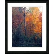 Studio Works Modern ''Vermont Forest - Orange'' by Zhee Singer Framed Graphic Art; Black